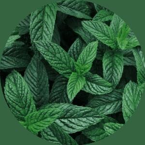 citromfű gyógynövény